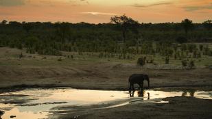 Több ezer állatot telepítenek át Zimbabwéban a pusztító aszály miatt