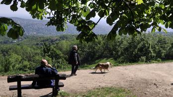 Pokorni Zoltán már egyeztetne a Normafa-fakivágásokról Karácsony Gergellyel és Szabó Tímeával