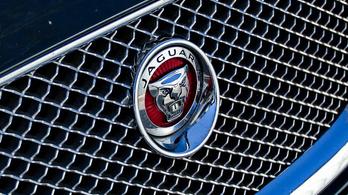 A tulajdonosa partnert keres a Jaguarnak