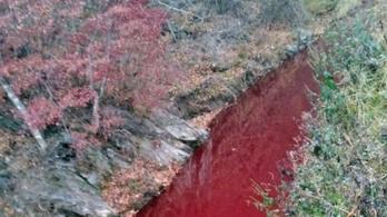 Vörösre változtatta a folyó vizét a 47 ezer levágott sertés vére