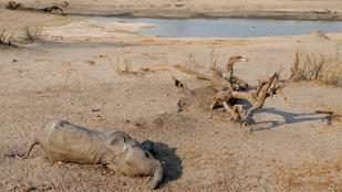 Több mint 200 elefántot ölt meg Zimbabwében a súlyos aszály