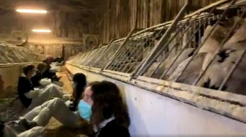 Azt mondja egy libamájtermelő, hogy libamájellenes aktivisták miatt haltak meg az állatai