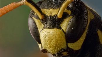 A rovarapokalipszis az egész élővilág jövőjét veszélyezteti