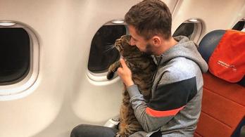 Két kilónyi macska miatt ugrott a törzsutasigazolvány