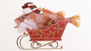 Kiválasztás, sütés, tálalás és lájfhekkek – mindent a halról