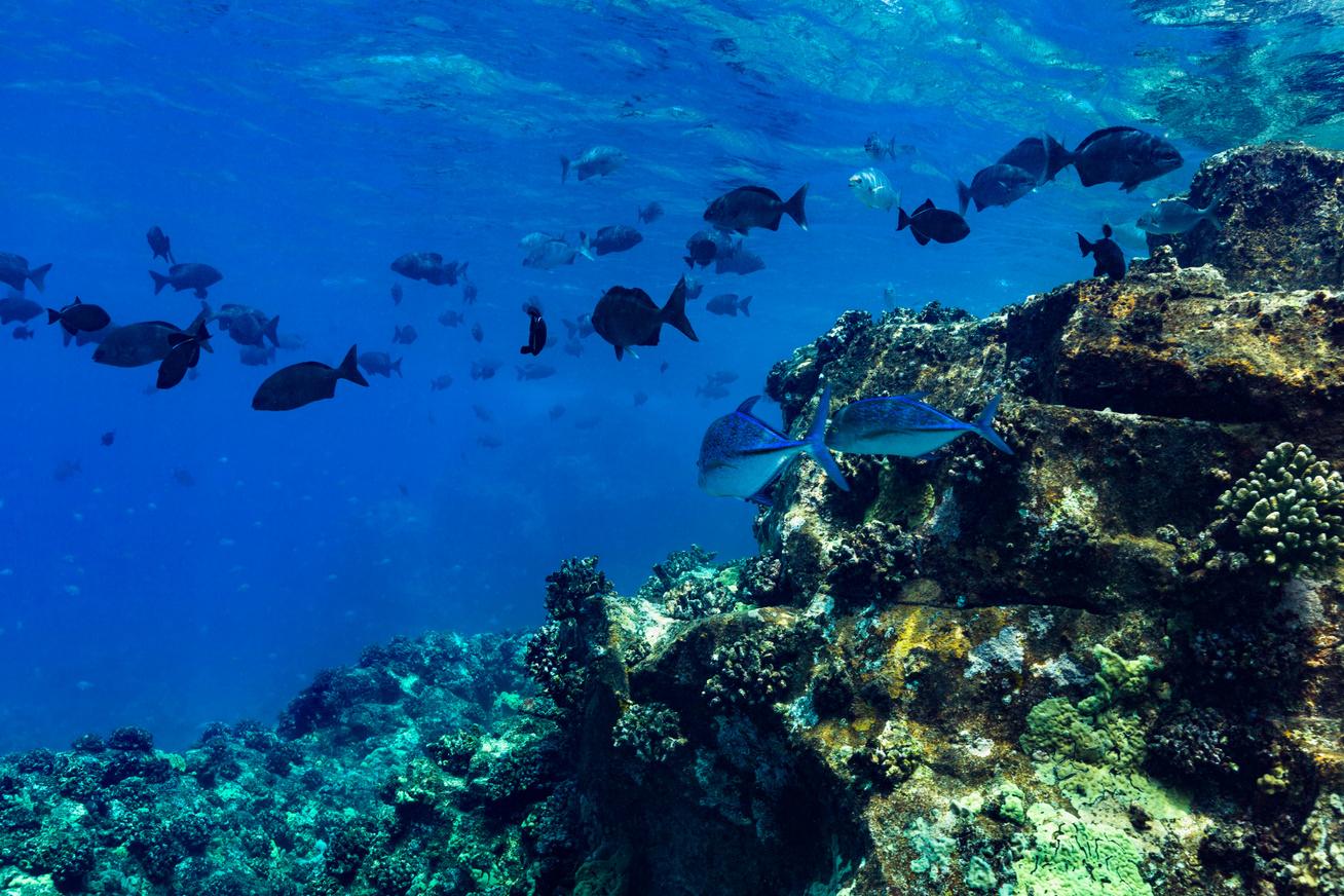 hawaii-halak