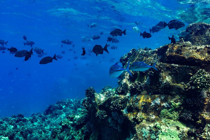 Aggasztó jelenséget figyeltek meg a halaknál a kutatók - Még nem ismerik a következményeket