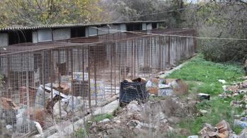Csontsovány kutyákat mentettek meg egy pécsi horrortanyáról
