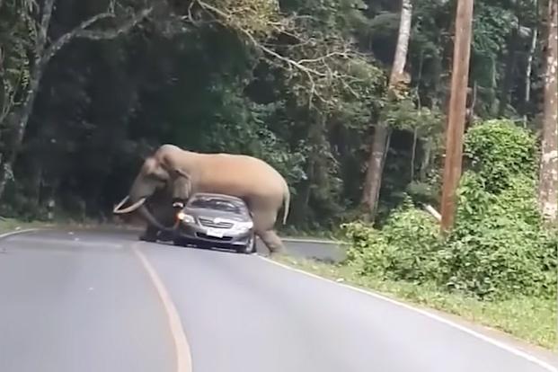 Elefánt anya pornó