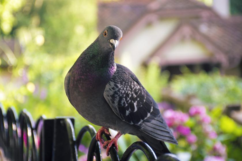 Virágot lopott a madár a katonasírról: meglepő dolog derült ki, amikor követni kezdték