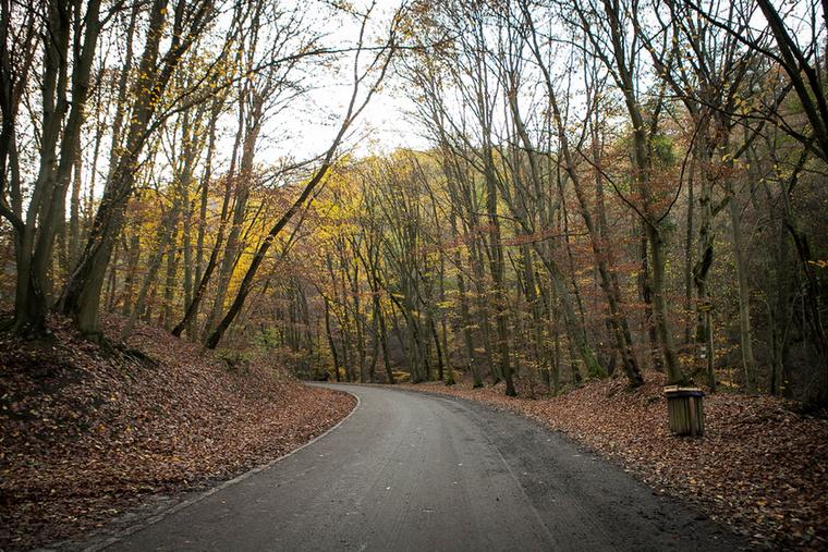 1981-ben Magyarországon – négy hasonló intézmény után – ötödikként jött létre az egész Pilis és Visegrádi-hegység területét magában foglaló Pilisi Bioszféra Rezervátum