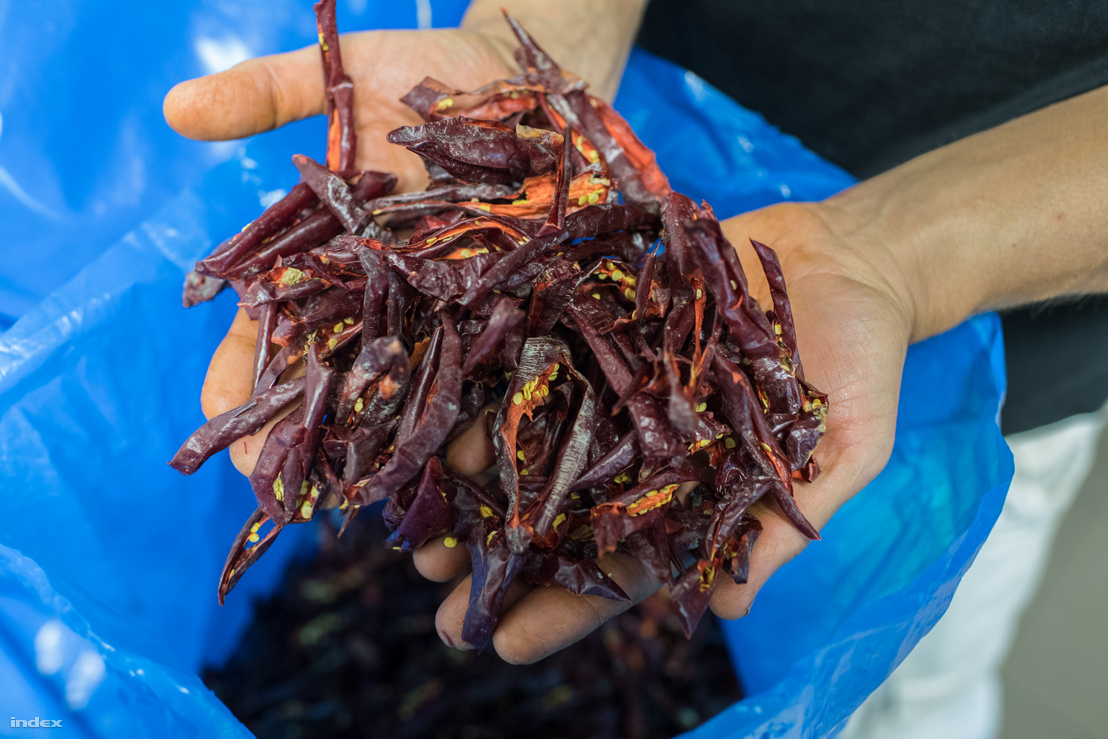 Az 50 fokon szárítás után a paprika víztartalma már csak 3-6 százalék