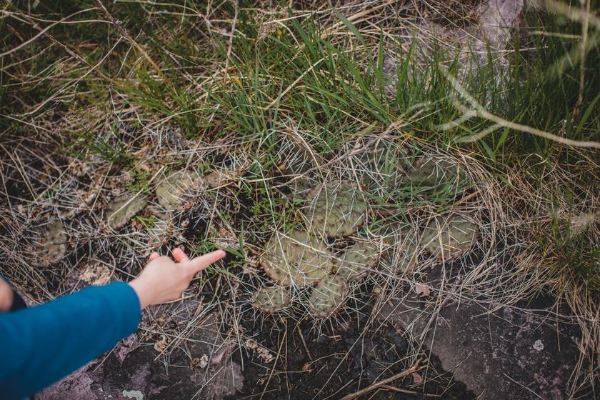 A Vértesben is elszabadult a növényveszedelem: miért rossz ötlet szobanövényeket természetvédelmi területen elültetni?