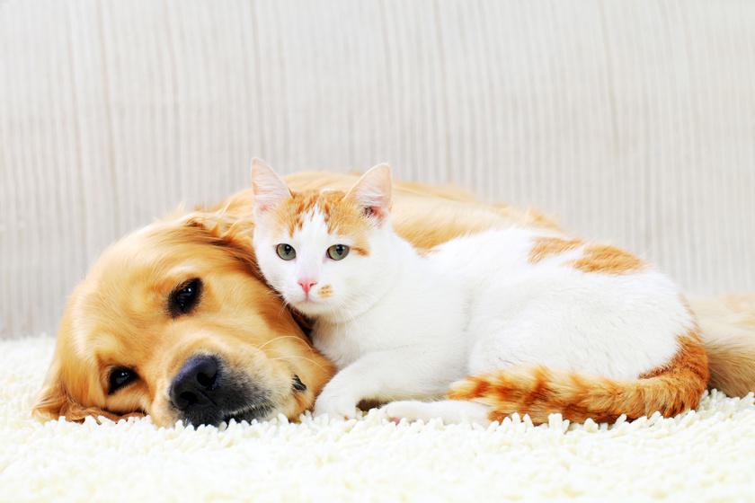 Állatokra is veszélyes az emberek egyik leggyakoribb betegsége - Hogyan előzhető meg?