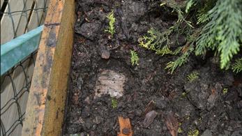 187 millió forintot elásott a kertjében a biatorbágyi díler