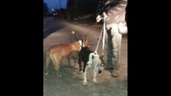 Íjjal lőttek meg két kutyát Maglódon