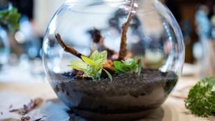 DIY: Dobd fel az otthonod japán mikrokerttel!