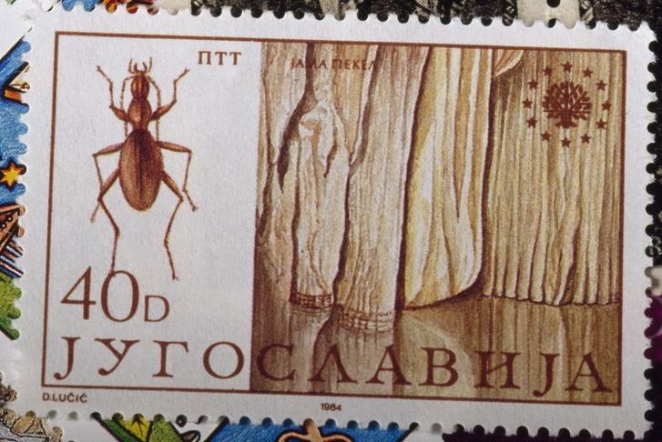 1984-es jugoszláv bélyeg a Anophthalmus hitleriről, egy veszélyeztetett állatokat ábrázoló sorozatból. A nevét azért nem írták ki