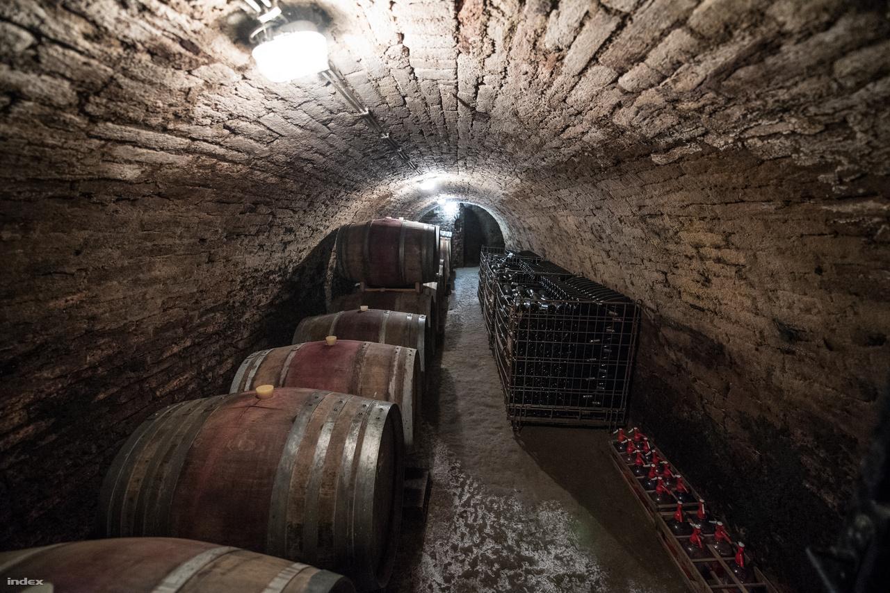 Fajtánként évente 500-600 üveg bort gyártanak le, a kadarkából csak 200-250-et, piac tekintetében pedig termelnek szinte mindenhova: a borok 10-15%-a külföldre kerül éttermekbe vagy borbárokba, 30-35%-a helyben, Hajóson fogy el. A palackok jelentős része belföldi gasztronómiába kerül, Szeged, Tata és Budapest mellett több Michelin-csillagos étteremben is megtalálhatók. Következő céljuknak azt tartják, hogy főként a Michelin-csillagos helyeiket meg tudják tartani, illetve hogy a natúr-organikus vonalat még jobban erősítsék.