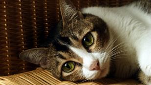 Mennyi időre szabad magára hagyni a macskát?