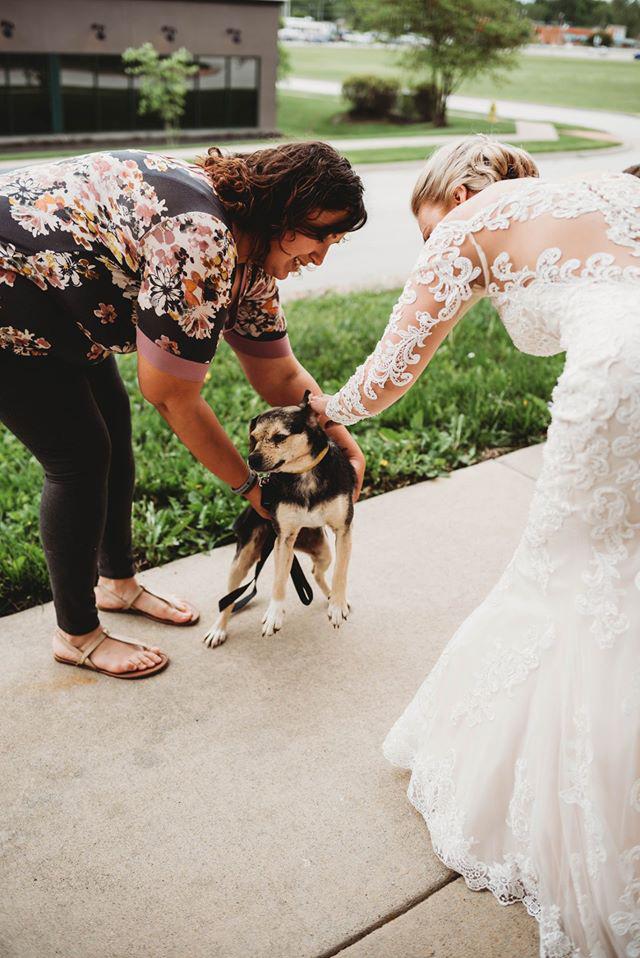 A menyasszony hosszasan kutakodott, de végül rálelt a Haven of Ozarks Animal Sanctuaryra, akik örömmel vettek részt az ötlete megvalósításában a nemes cél érdekében.