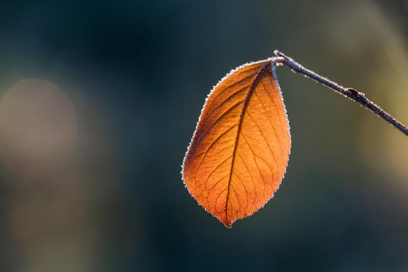 Lassan, de biztosan jönnek a mínuszok: beköszönt az ősz a hétvégén