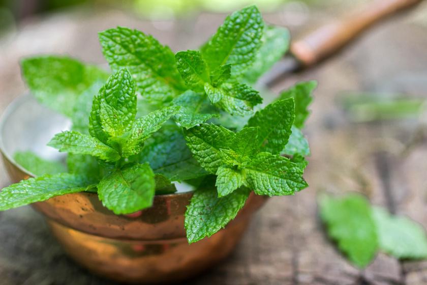 A borsmenta mentoltartalmú illóolajat, csersavat, növényi savakat és keserűanyagot tartalmaz. Remek görcsoldó, fertőtlenítő hatású, szélhajtó, és az étvágyat is helyreállítja.