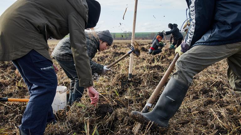 Ásót fogtak, hogy újra annyi magyar erdő legyen, mint az ipari forradalom előtt
