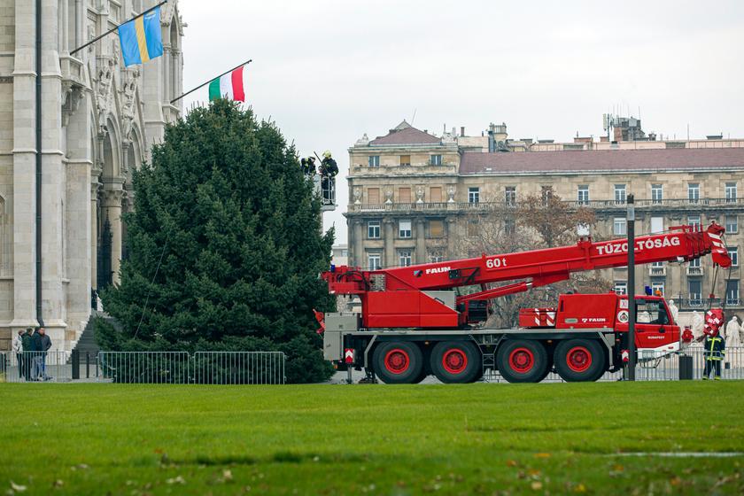 A szinte tökéletes alakú fát a tűzoltók vágták ki, szállították Budapestre, és állították fel az Országház előtt.