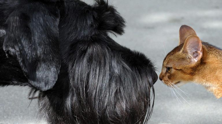 Kutyája és macskája milliárdokat hoz a konyhára és százezreknek ad munkát