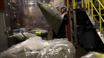 Kiszorítják a dílerek a legális kannabiszkereskedőket Kaliforniában