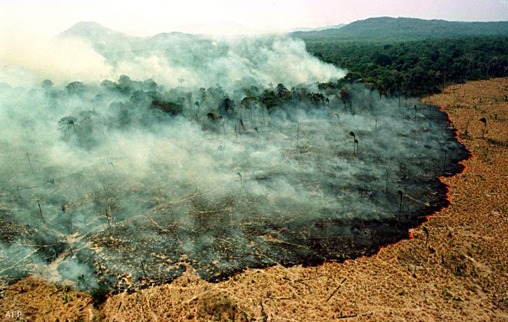 Tűz pusztította az erdőt 2019. március 22-én 120 kilométerre Boa Vista várostól, Brazíliában