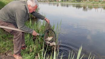 Újjáélesztik a Holt-Tisza és három holtágának élővilágát