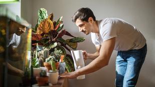 Tényleg megtisztítják a levegőt a szobanövények?