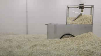 Mitől pattog a popcorn?