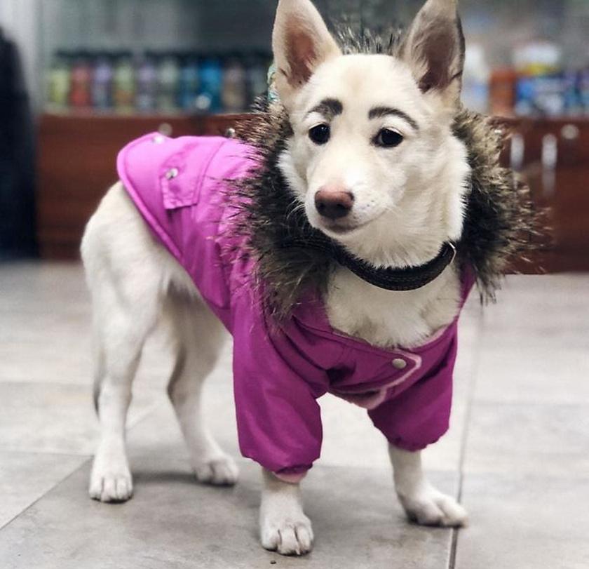 A kutyának nemcsak a szőre, hanem a bőre is sötétebb a szemöldök vonalánál, innen tudták a gondozók, hogy nem festék, hanem egyfajta anyajegy van Betty testén.