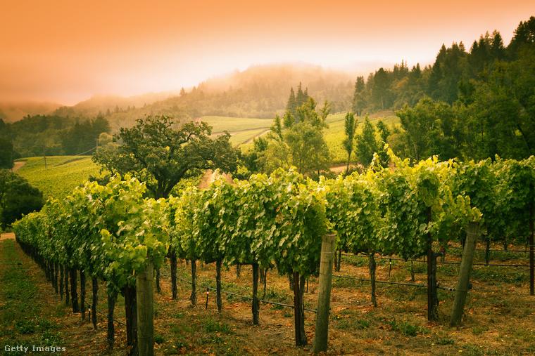 Napa völgy, KaliforniaA kaliforniaiak nagyon büszkék domborzatukra, főként a Napa völgyre, ahol az ország legjobb borának alapjául szolgáló szőlőt termesztik