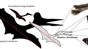 Egy eddig ismeretlen, repülő őshüllő került elő a Sebes folyó medréből