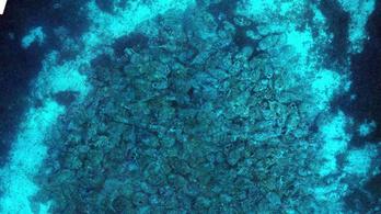 2000 éves, 6000 amforát szállító római hajóroncsot találtak a Jón-tenger mélyén