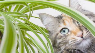 6 könnyen tartható növény, amely nem veszélyes a házi kedvencekre