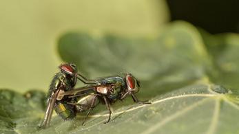 Mikulásig lehet szavazni az év rovarára