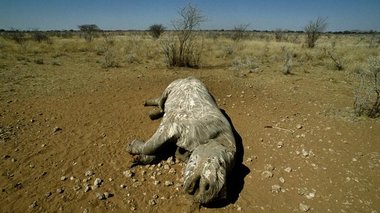 A tudósok kereskedelmi háborút vívnának az orvvadászokkal