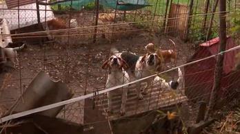 A francia köztévé az illegális kutyakereskedelemről forgatott, a szálak Magyarországra vezettek