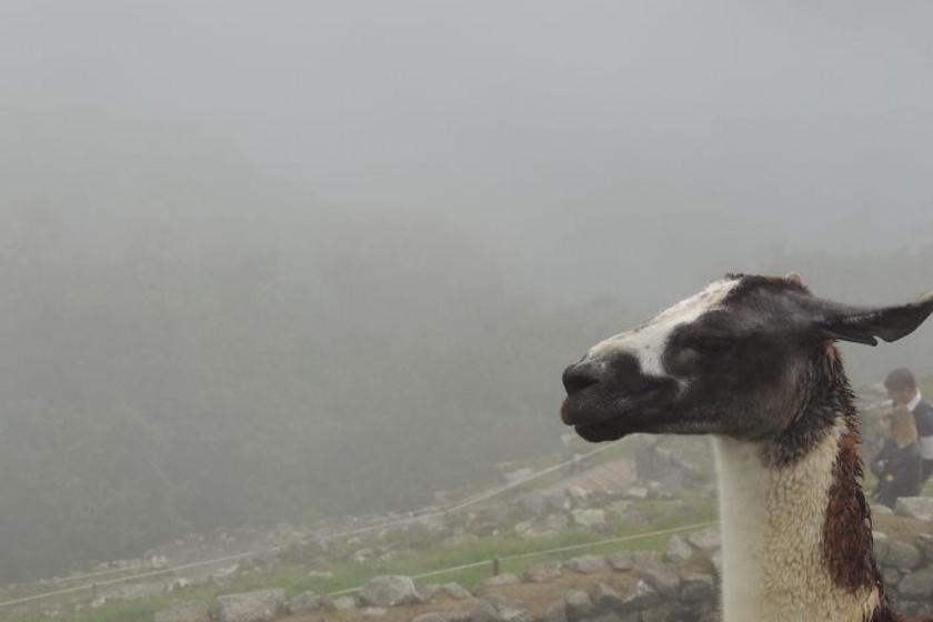 Van, aki hajnaliban kelt, hogy megtegye a túrát a Machu Picchuhoz, de az egész világörökségi romvárosból csak egy ködtakaró és egy kecske jutott.