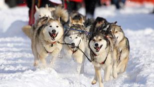 Beteg gyerekek életét mentette meg Balto, a hős szánhúzó kutya
