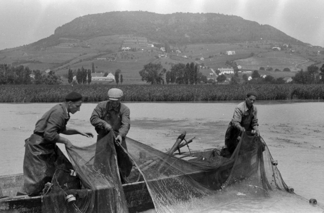 Hagyományos, kerítőhálós halászat a Badacsony alatt. Süt a képről, hogy nyáron sem lehetett egyszerű munka a halászmesterség.