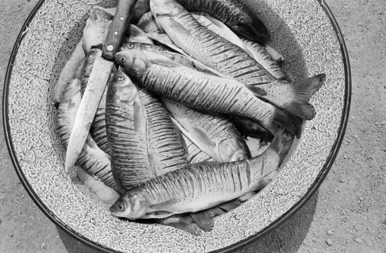 Vajon milyen halbiológiai kísérlethez kellett ez a vájdlingnyi megpucolt és beirdalt, méreten aluli amur?
