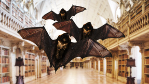 Denevérek védik a világ egyik legszebb könyvtárát