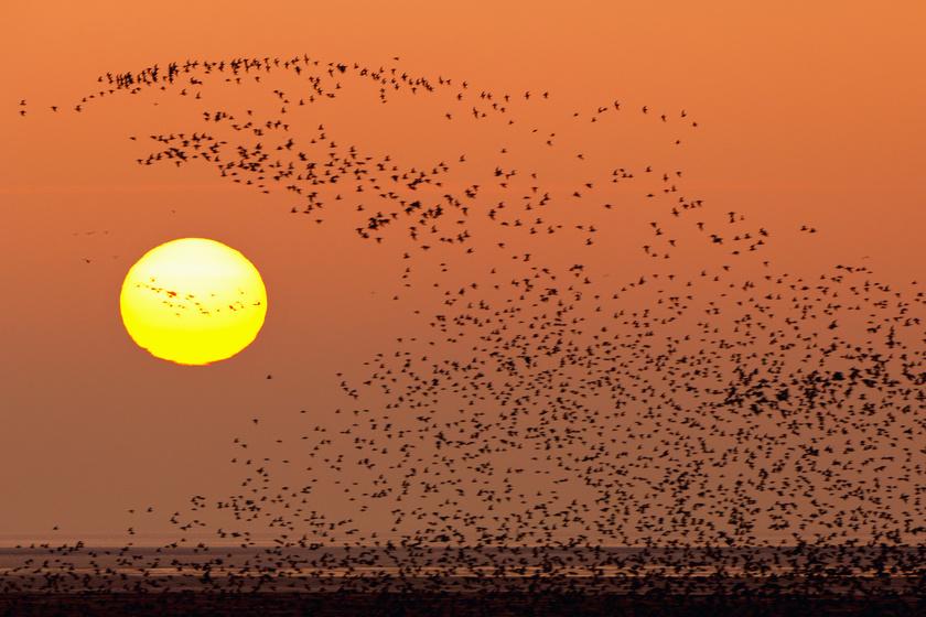 Furcsa változást figyeltek meg a költöző madaraknál: a kutatókat is meglepte