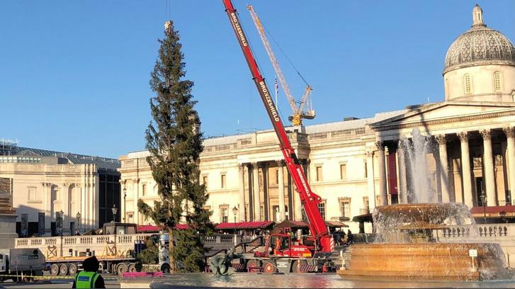 A londoni Trafalgar tér karácsonyfája